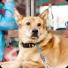 Does Homeowners Insurance Cover Dog Bites? - Insuropedia